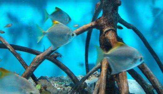 東京都内の水族館の料金・割引まとめ、年パスや無料入場情報もあるよ