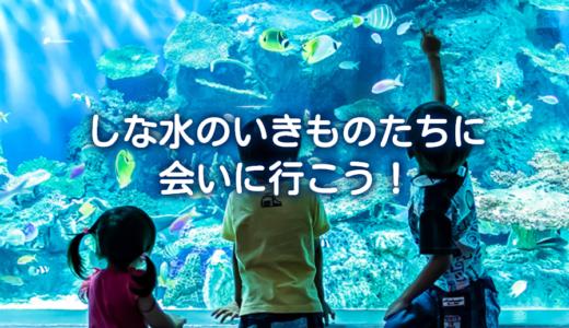 【クーポン割引情報まとめ】しながわ水族館によりお得に行くには?
